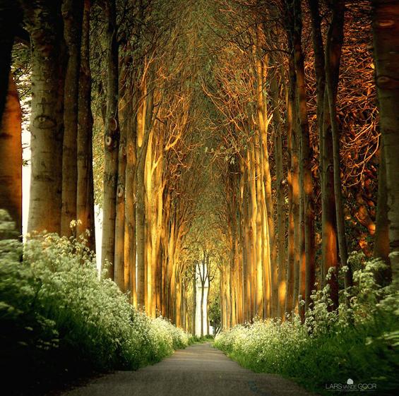 forest dense