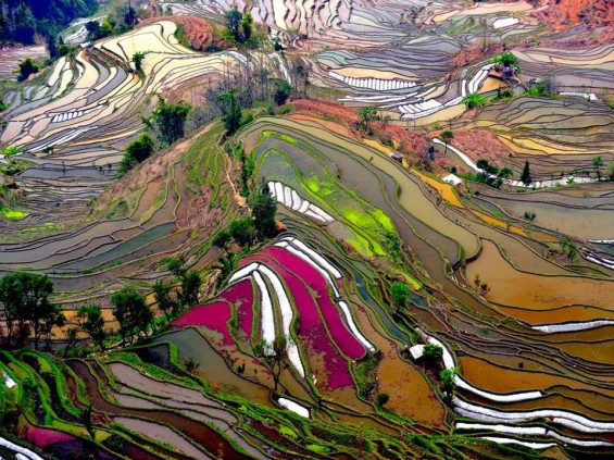 RIceFieldChina_ThierryBornier