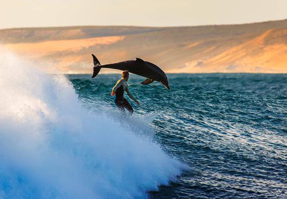 SurfinWDolphins_matt_hutton