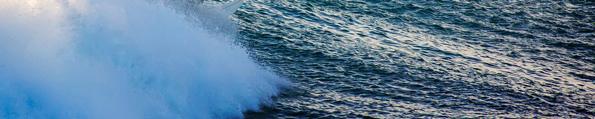 SurfinWDolphins_MattHutton