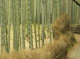 bamboo_f